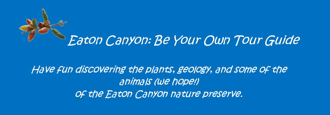 Eaton Canyon: Be Your Own Tour Guide
